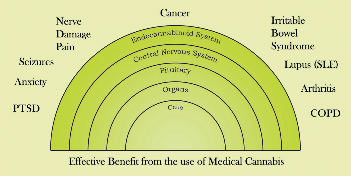 Medical cannabis research actually dates back to Sir William O-Shaughnessy in the 1830s; its benefits are not anecdotes, and as you can its interaction with the endocannabinoid system is critical in resolving medical issues.